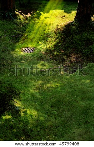 Metallic grate on patch of vivid green moss in Japanese garden - stock photo