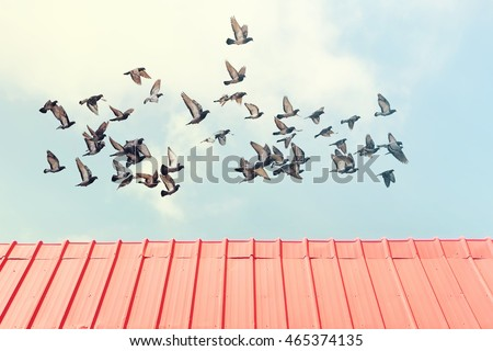 Metallic red roof against the blue sky with the flying flock of pigeons ( doves) above. Toned colors. Old style photo