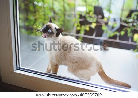 mewing cat at balcony door - stock photo