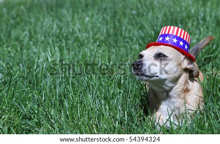 Mexican Chihuahua wearing patriotic hat - stock photo