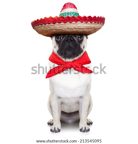 mexican dog with big sombrero hat and red tie - stock photo