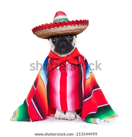 mexican dog with sombrero and a big poncho - stock photo