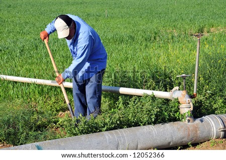 Mexican Farm Worker Weeds Around Irrigation Stock Photo (Royalty ...