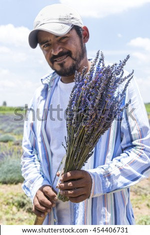 Mexican farmer with Lavender bunch. Portrait of a proud farmer with his recently cropped Lavender flowers  - stock photo