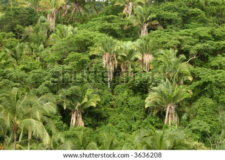 Mexican jungle - stock photo