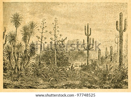 Mexican landscape - old illustration by unknown artist from Botanika Szkolna na Klasy Nizsze, author Jozef Rostafinski, published by W.L. Anczyc, Krakow and Warsaw, 1911 - stock photo