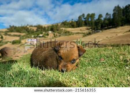 Mexican stray dog puppy curled up int the grass - stock photo