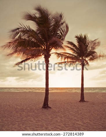 Miami Beach, Florida summer sunrise or sunset with palm trees, beautiful sky and ocean, desaturated instagram processing - stock photo