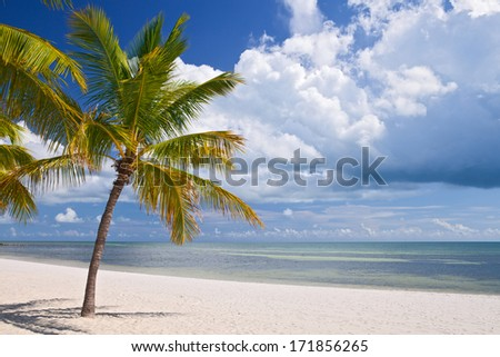 Miami Florida, beautiful summer beach landscape with ocean and palm trees - stock photo