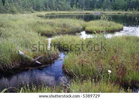 Michigan bog with beaver home - stock photo
