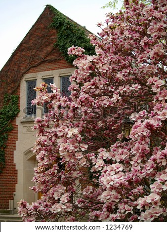Michigan State University Alumni Chapel in the springtime (focus on tree) - stock photo