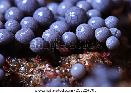 micro-organism fungus mold structure - stock photo
