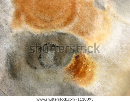 Microbiology - stock photo