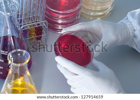 Microbiology Experiment - stock photo