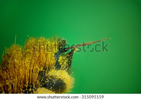 Micrograph of the bee sting made with the technique of stacking - stock photo