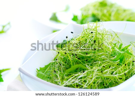 Microgreens. Healthy Green Salad. Little Sprouts. Diet - stock photo