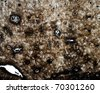 Microscopic section x100 of normal hard (compact) bone showing details of Haversian canals, lamellae and osteoblasts. - stock photo