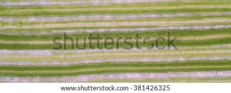 microscopic view of the leaf surface showing plant cells. - stock photo