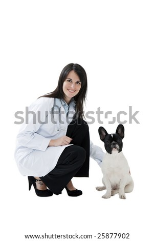 mid adult veterinarian and french bulldog on white background - stock photo