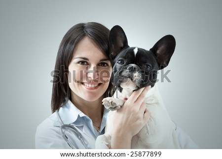 mid adult veterinarian holding french bulldog indoors - stock photo