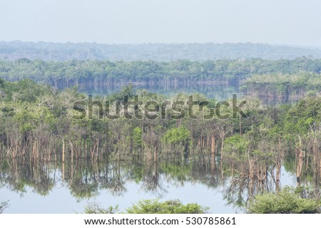 Midday haze over scenic flooded forest landscape of Urubu River tributary in the Amazon
