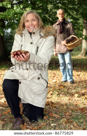 Middle aged couple picking chestnut. - stock photo