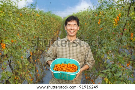 middle aged happy  asian farmer holding tomato on his farm - stock photo