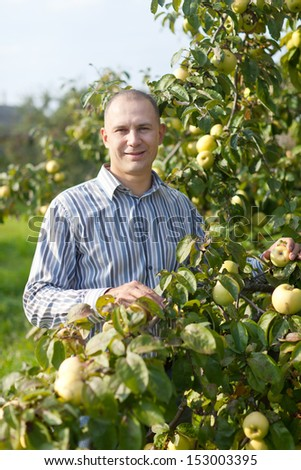 Middle-aged man near apples trees in garden - stock photo