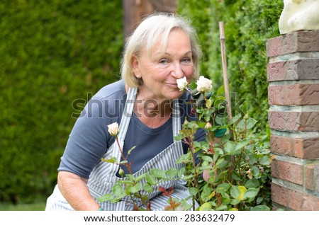 Middle Aged White-Haired Woman Kissing her Rose Plant at the Garden While Looking at the Camera. - stock photo