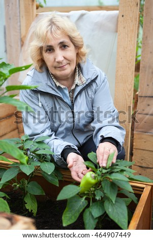 Middle aged woman growing sweet green pepper in greenhouse