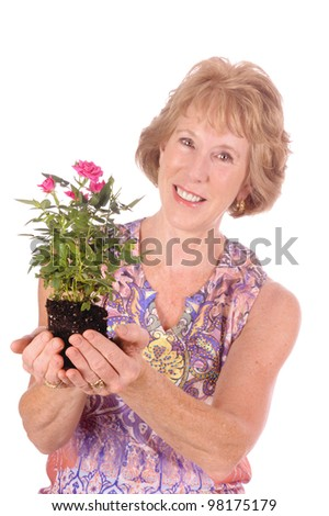 middle-aged woman holding a rose plant ready to put in garden, isolated over white - stock photo