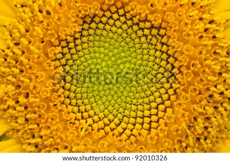Middle of Sunflower Close-Up - stock photo