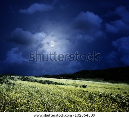 midnight on the meadow,  natural backgrounds - stock photo