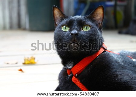 Midnight the Cat outside on the deck on a summer day - stock photo