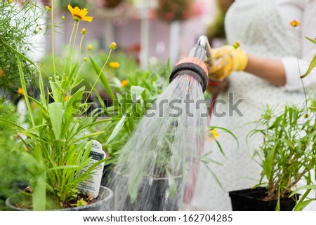 Midsection of female florist watering flower pots in greenhouse - stock photo