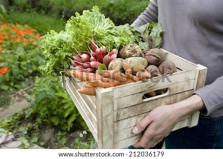 Midsection of woman carrying crate with freshly harvested vegetables in garden - stock photo