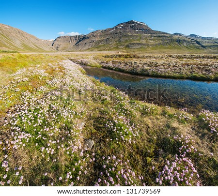 Mighty fjords rise from the sea in the Westfjords Peninsula, northwestern Iceland. The landscape under the fjords is full of brooks and flowers. - stock photo