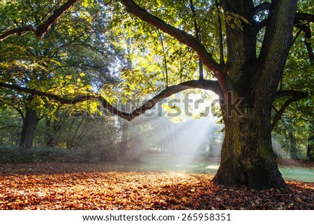 mighty oak tree wrapped in sunshine - stock photo