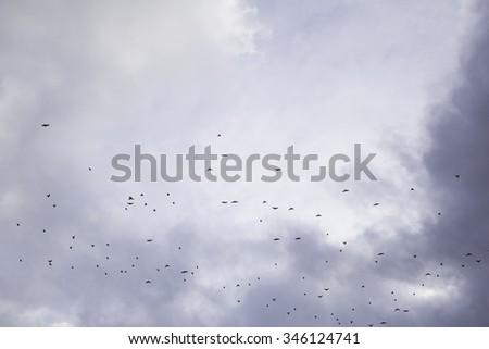 Migrating birds flying sky, animals - stock photo