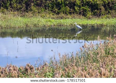 Migrating Birds in Hong Kong Wetland Park  - stock photo