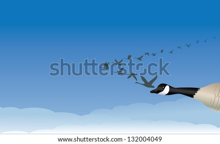 Migrating Geese. JPG - stock photo