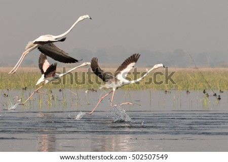 indian migratory birds India has signed today the convention on migratory species (cms) memorandum of understanding on the conservation of migratory birds of prey in africa and eurasia (raptors mou) raising the number of signatories to 56.