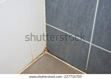 Mildewed walls with different sorts of mold
