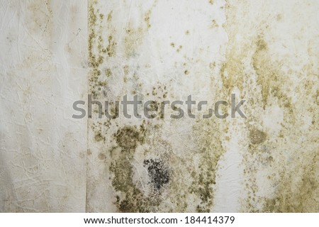 Mildewed walls with different sorts of mold (close-up shot) - stock photo