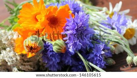 Milfoil,yarrow,calendula,daisy - stock photo
