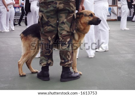 military dog during fleet week