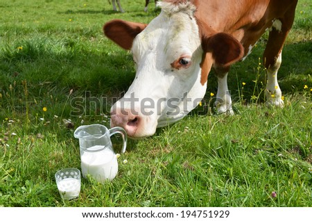 Milk and cows. Emmental region, Switzerland  - stock photo