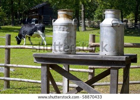 Milk cans on a bench, a cow feeding grass in the background - stock photo