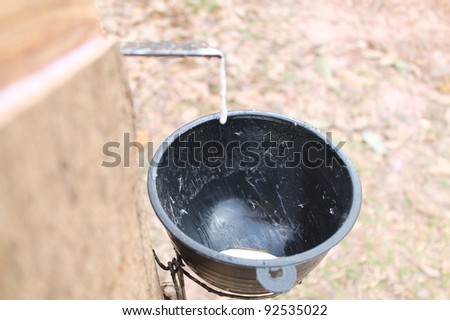Milk of rubber tree flows into a wooden bowl - stock photo