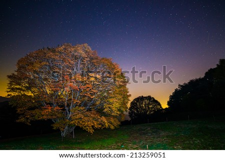 Milky way and Maple - stock photo